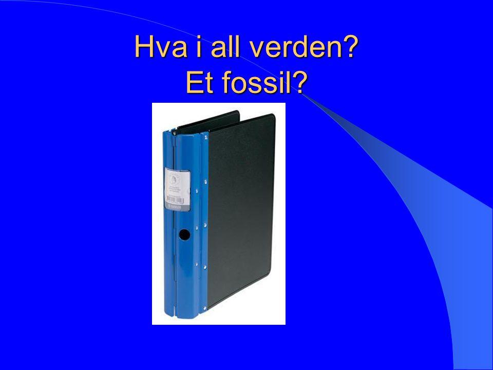 Hva i all verden? Et fossil?