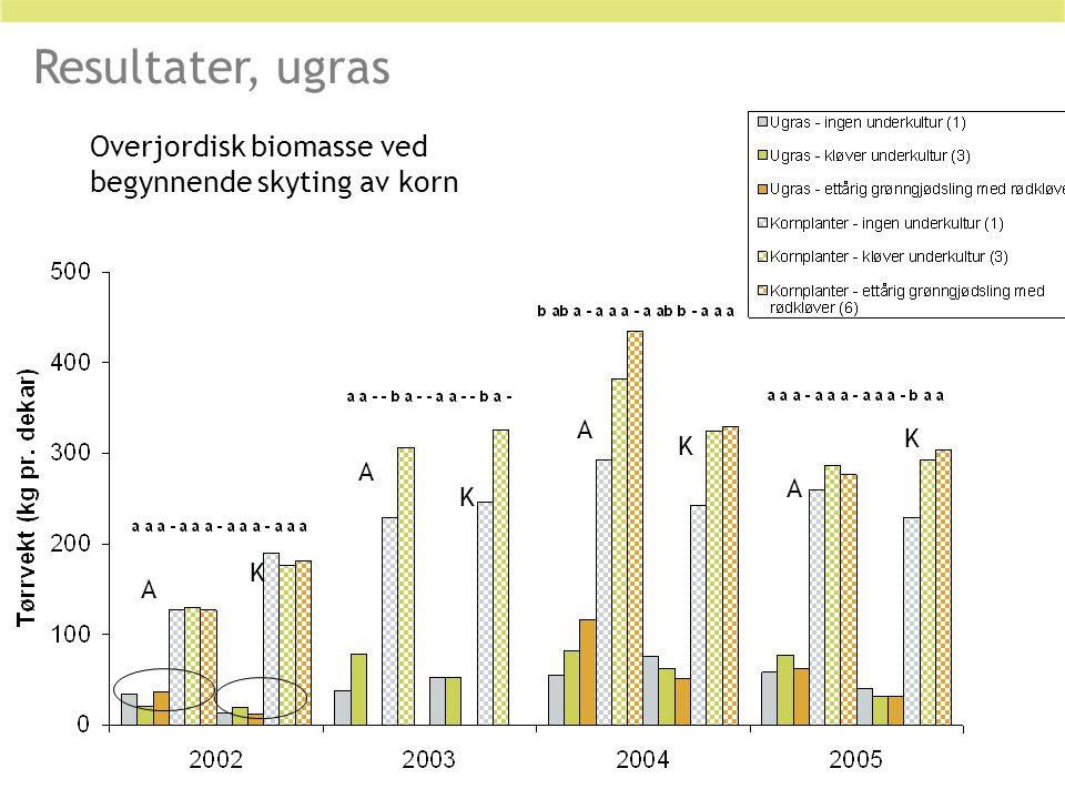 Overjordisk biomasse ved begynnende skyting av korn A K A A A K K K Resultater, ugras