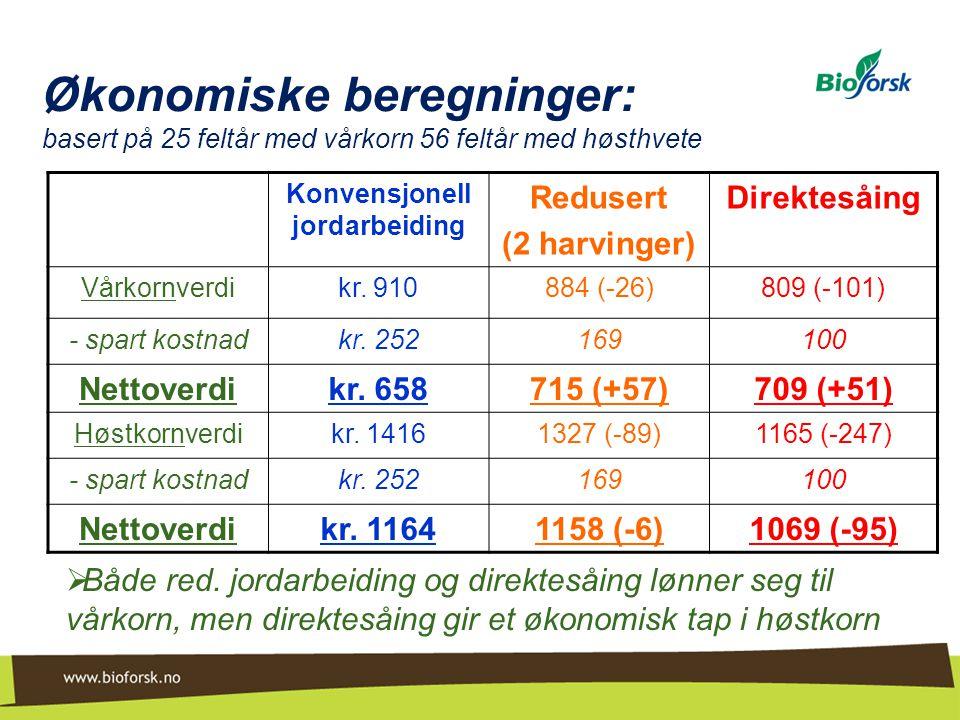 Økonomiske beregninger: basert på 25 feltår med vårkorn 56 feltår med høsthvete  Både red. jordarbeiding og direktesåing lønner seg til vårkorn, men