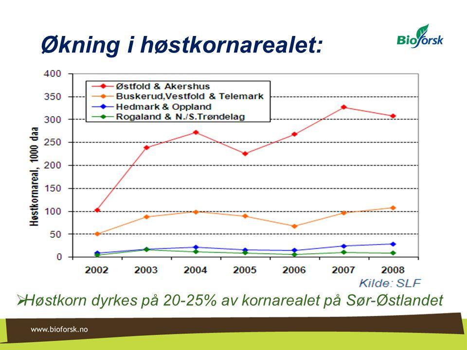 Øsaker felt 2: Ulik jordarbeiding til høsthvete i omløp med rybs og havre Avlinger 1998-2006 DirektesåingBare harving Pløying og harving Høsthvete450 (90%) 481 (96%) 503 (100%) Havre432 (90%) 508 (106%) 481 (100%)  Svakere resultat av redusert jordarbeiding til høstkorn enn til havre (rybstall ikke vist, ingen forskjell)  Direktesåing har gitt samme avlingsnedgang hos begge vekstene, men mindre enn i storskalafeltene