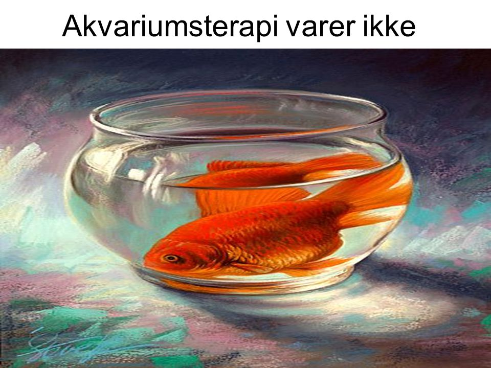 Akvariumsterapi varer ikke