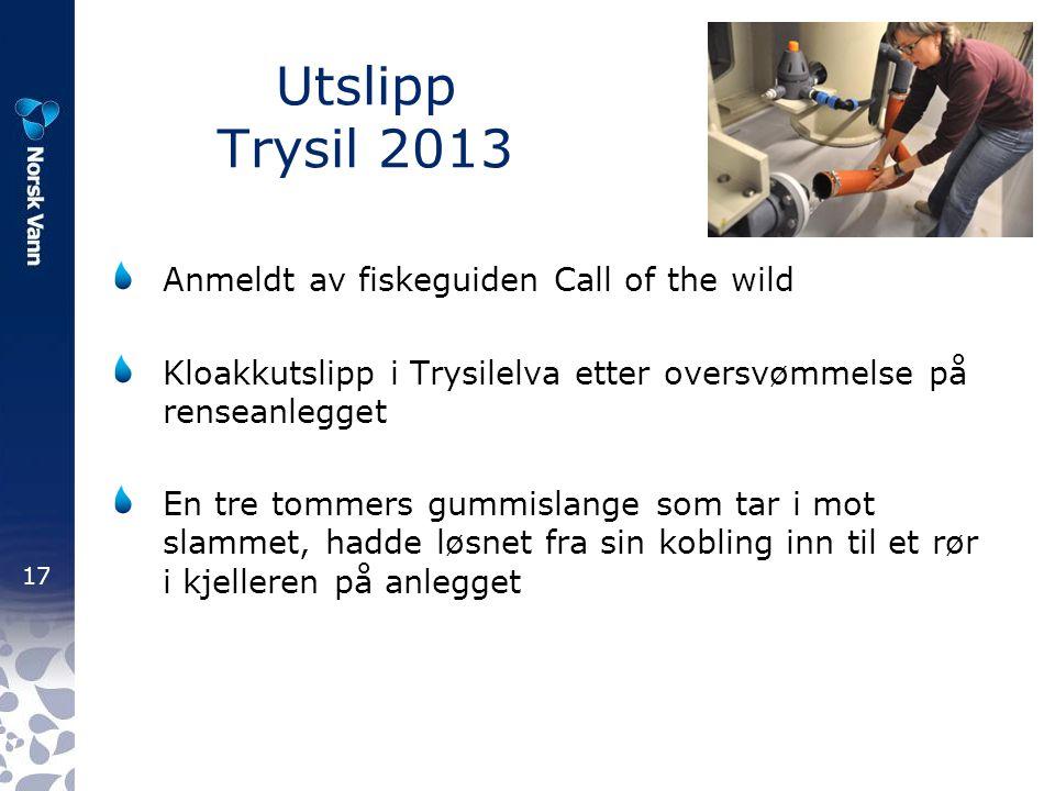 17 Utslipp Trysil 2013 Anmeldt av fiskeguiden Call of the wild Kloakkutslipp i Trysilelva etter oversvømmelse på renseanlegget En tre tommers gummisla