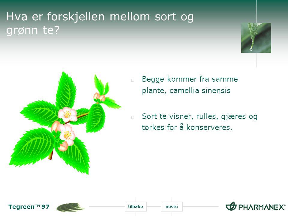 Tegreen™ 97 tilbakeneste Hva er forskjellen mellom sort og grønn te?  Begge kommer fra samme plante, camellia sinensis  Sort te visner, rulles, gjær