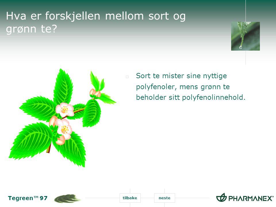 Tegreen™ 97 tilbakeneste Hva er forskjellen mellom sort og grønn te?  Sort te mister sine nyttige polyfenoler, mens grønn te beholder sitt polyfenoli