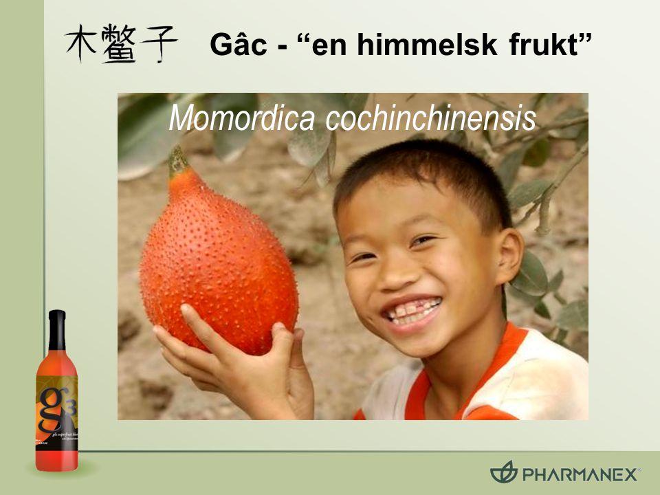 """Gâc - """"en himmelsk frukt"""" Momordica cochinchinensis"""