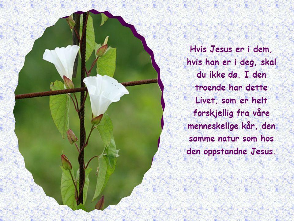 Allerede nå er han, for alle troende, dette guddommelige Livet, som ikke kan uttrykkes i ord, det evige Livet som aldri dør.