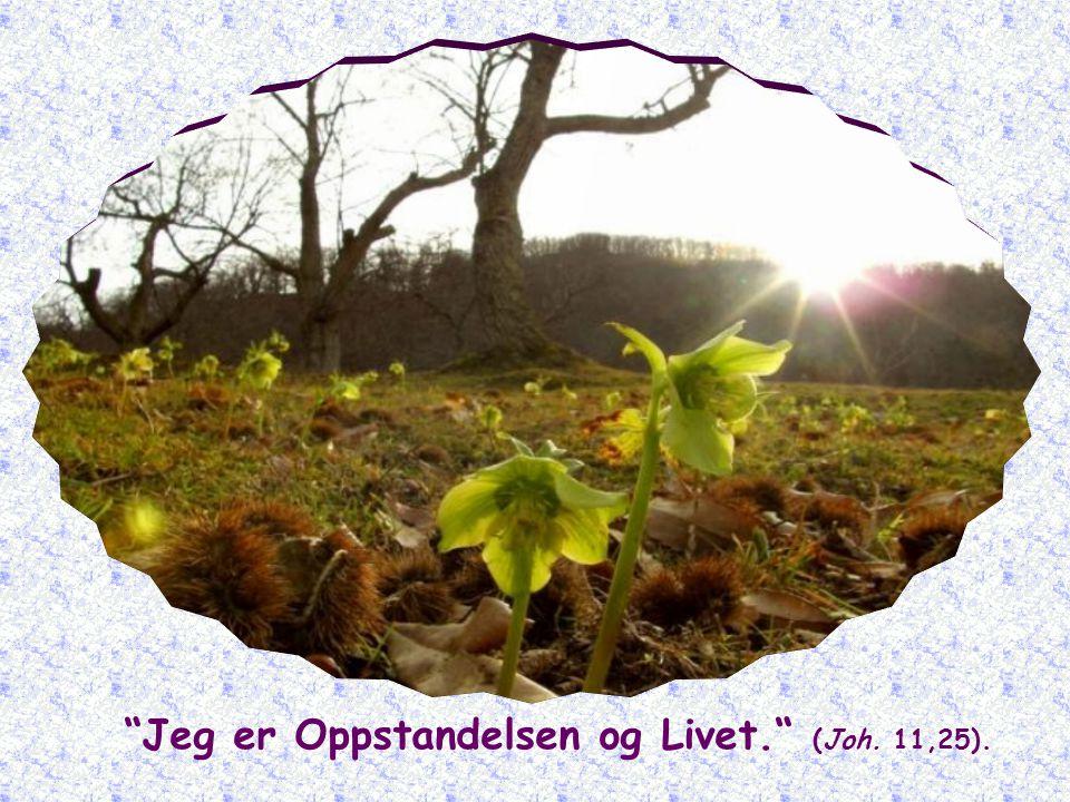 Jeg er Oppstandelsen og Livet. (Joh. 11,25).