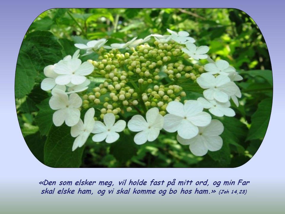 Og på en slik kjærlighet, som den kristne setter ut i praktisk handling, svarer Gud med sin kjærlighet: Treenigheten kommer for å bo i ham.