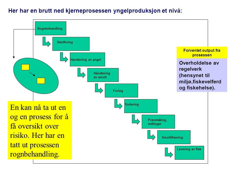 Her har en brutt ned kjerneprosessen yngelproduksjon et nivå: Rognbehandling Startforing Handtering av yngel Håndtering av smolt Foring Sortering Prøv