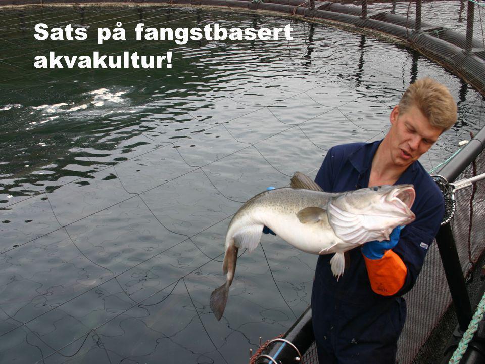 Sats på fangstbasert akvakultur!