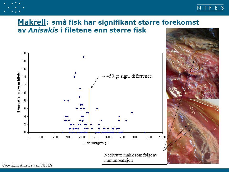Makrell: små fisk har signifikant større forekomst av Anisakis i filetene enn større fisk ~ 450 g: sign. difference Nedbrutte makk som følge av immunr