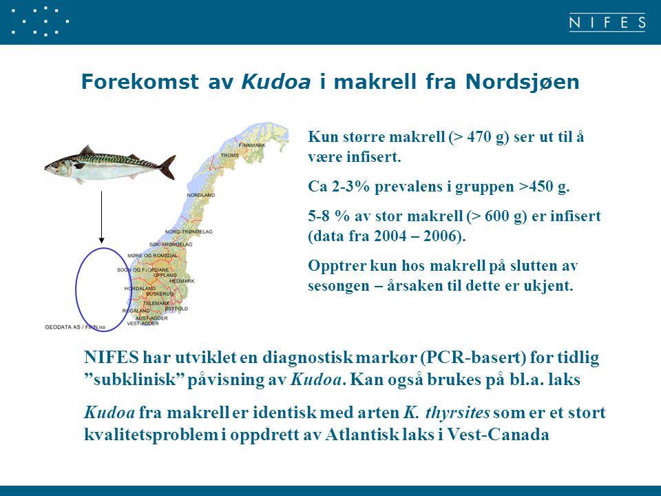 Forekomst av Kudoa i makrell fra Nordsjøen Kun større makrell (> 470 g) ser ut til å være infisert. Ca 2-3% prevalens i gruppen >450 g. 5-8 % av stor