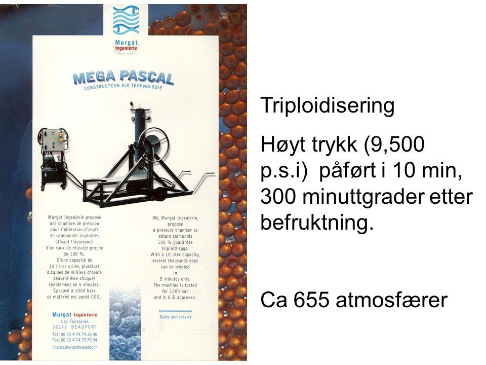Triploidisering Høyt trykk (9,500 p.s.i) påført i 10 min, 300 minuttgrader etter befruktning. Ca 655 atmosfærer