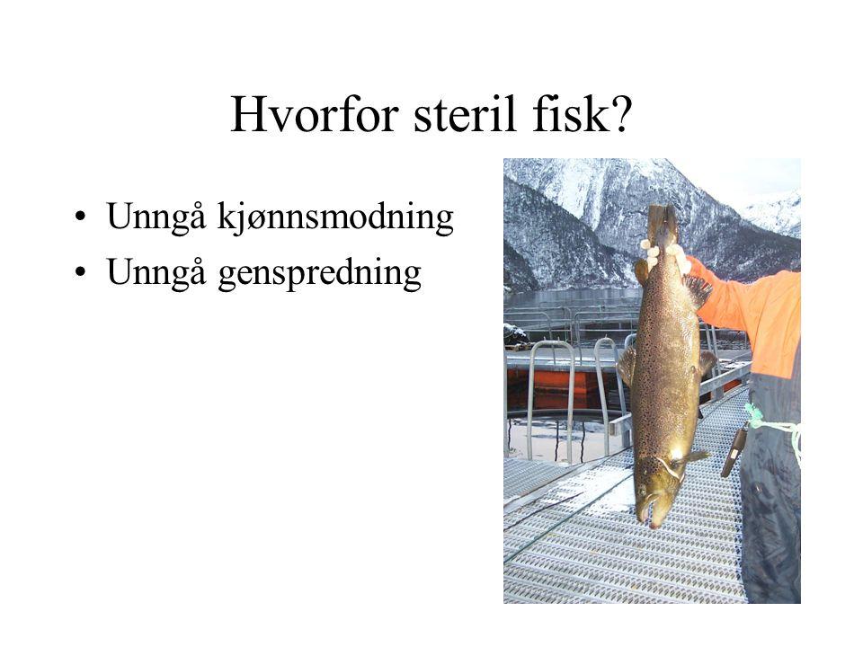 Hvorfor steril fisk? Unngå kjønnsmodning Unngå genspredning