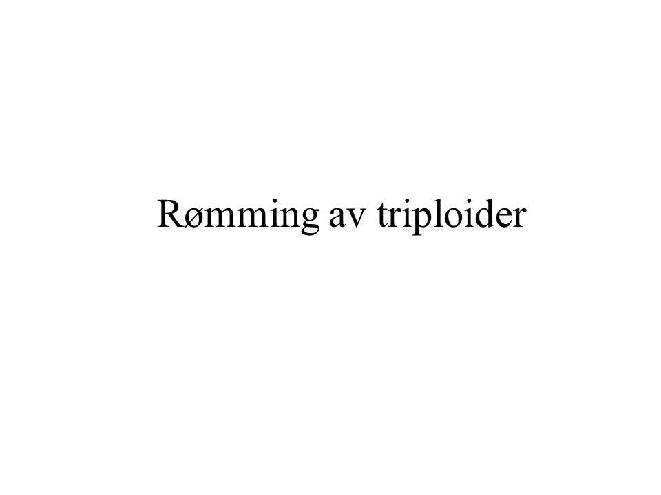 Rømming av triploider