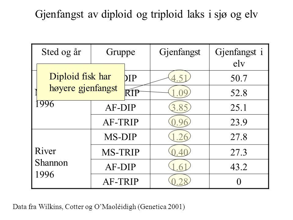 Gjenfangst av diploid og triploid laks i sjø og elv Sted og årGruppeGjenfangstGjenfangst i elv Newport 1996 MS-DIP4.5150.7 MS-TRIP1.0952.8 AF-DIP3.852