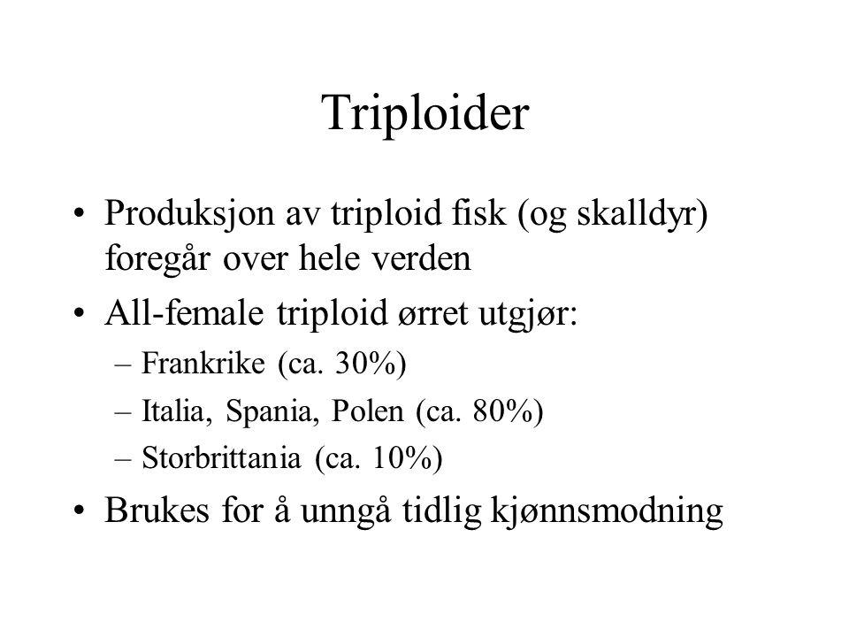 Triploider Produksjon av triploid fisk (og skalldyr) foregår over hele verden All-female triploid ørret utgjør: –Frankrike (ca. 30%) –Italia, Spania,