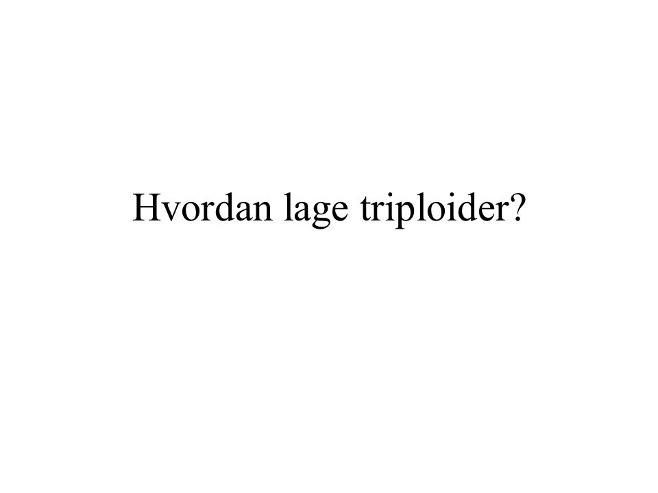 Hvordan lage triploider?