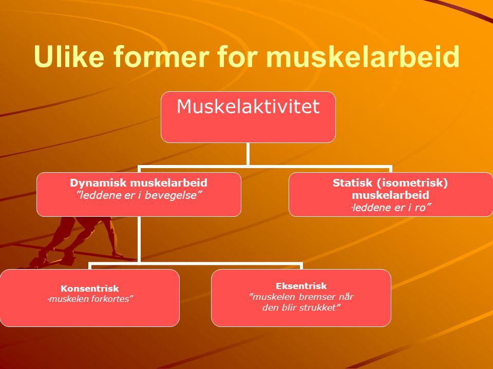 """Ulike former for muskelarbeid Muskelaktivitet Dynamisk muskelarbeid """"leddene er i bevegelse"""" Konsentrisk """"muskelen forkortes"""" Eksentrisk """"muskelen bre"""