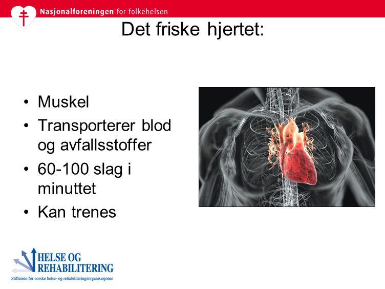 Det friske hjertet: Muskel Transporterer blod og avfallsstoffer 60-100 slag i minuttet Kan trenes