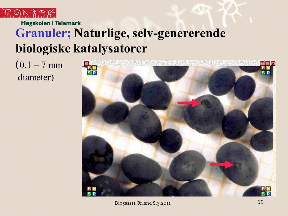 Biogass11 Ørland 8.3.2011 10 Granuler; Naturlige, selv-genererende biologiske katalysatorer ( 0,1 – 7 mm diameter)