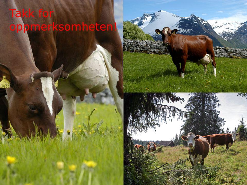 13 Det kongelige landbruks- og matdepartement Takk for oppmerksomheten!