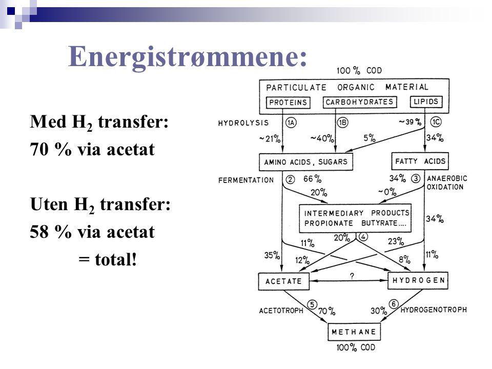 Med H 2 transfer: 70 % via acetat Uten H 2 transfer: 58 % via acetat = total! Energistrømmene: