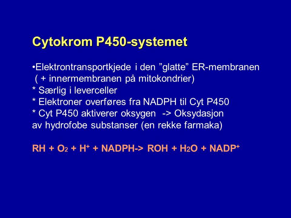 """Cytokrom P450-systemet Elektrontransportkjede i den """"glatte"""" ER-membranen ( + innermembranen på mitokondrier) * Særlig i leverceller * Elektroner over"""