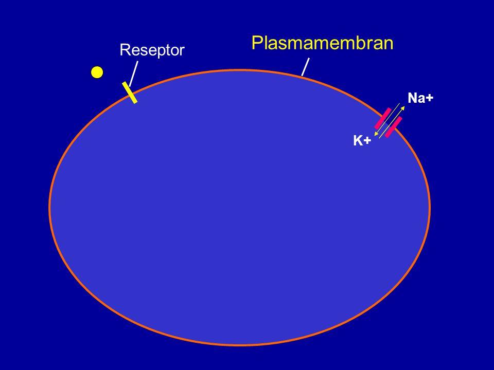 Golgi-apparatet * Glykosylering av proteiner * Konjugering av oksyderte substanser cis medialtrans