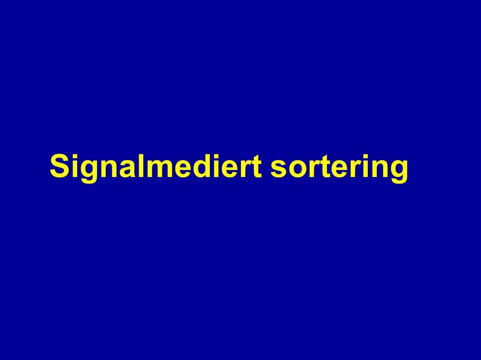Trans-Golgi-nettverket (TGN) * Sulfatering av proteiner * Sortering av proteiner * Sortering av lipider