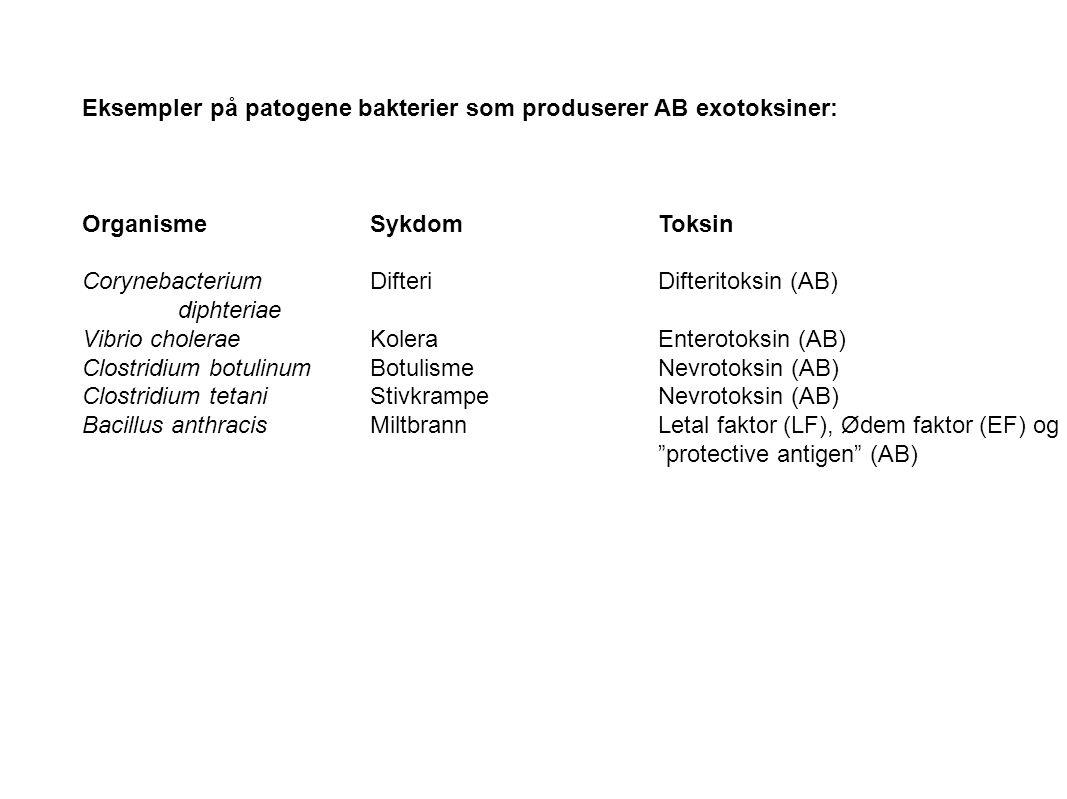 Eksempler på patogene bakterier som produserer AB exotoksiner: OrganismeSykdomToksin Corynebacterium DifteriDifteritoksin (AB) diphteriae Vibrio chole