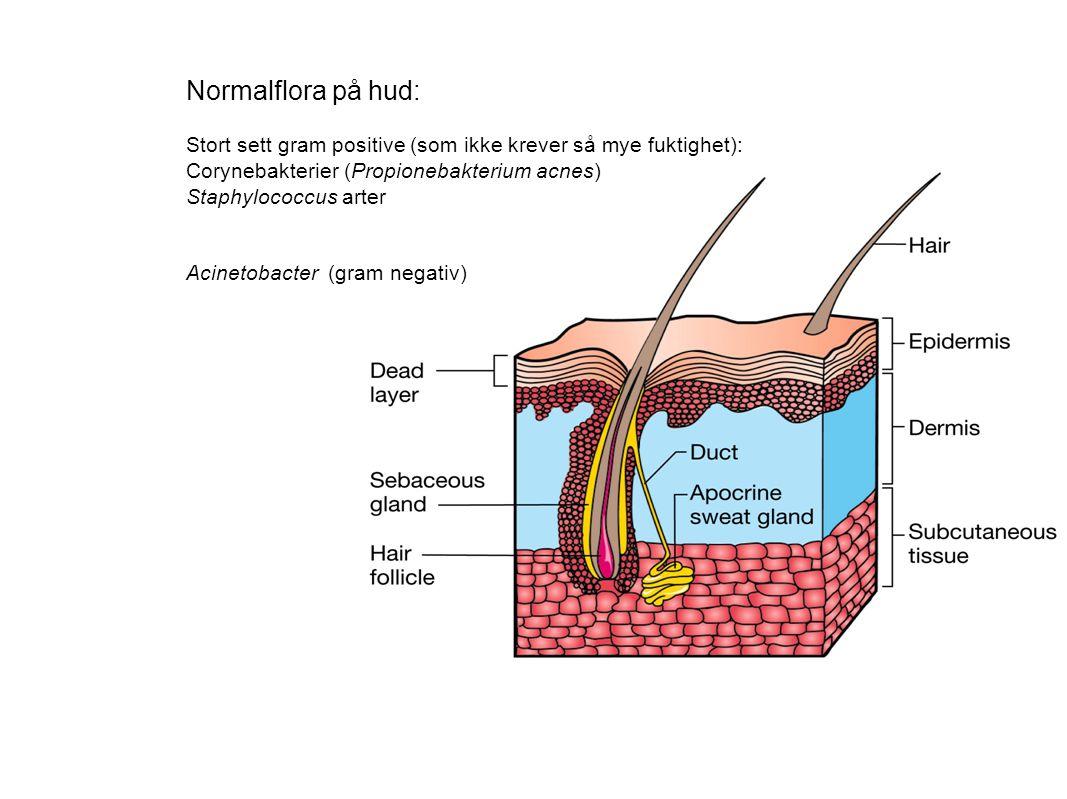 Normalflora på hud: Stort sett gram positive (som ikke krever så mye fuktighet): Corynebakterier (Propionebakterium acnes) Staphylococcus arter Acinet