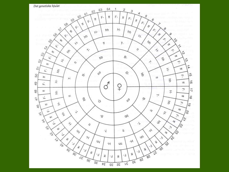 """Naturfaglig input Motivasjonsøvelse –""""Det genetiske hjulet"""" Naturfaglig """"tavleundervisning"""" (2-3 timer)"""