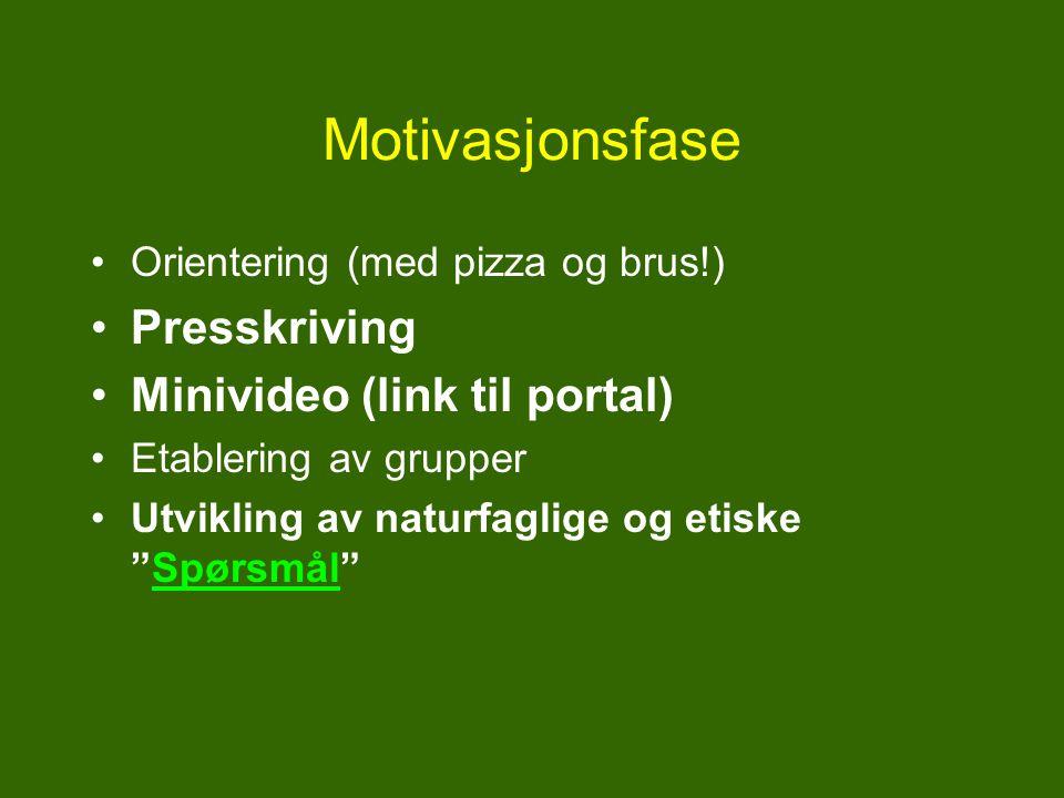 Motivasjonsfase Orientering (med pizza og brus!) Presskriving Minivideo (link til portal) Etablering av grupper Utvikling av naturfaglige og etiske Spørsmål Spørsmål