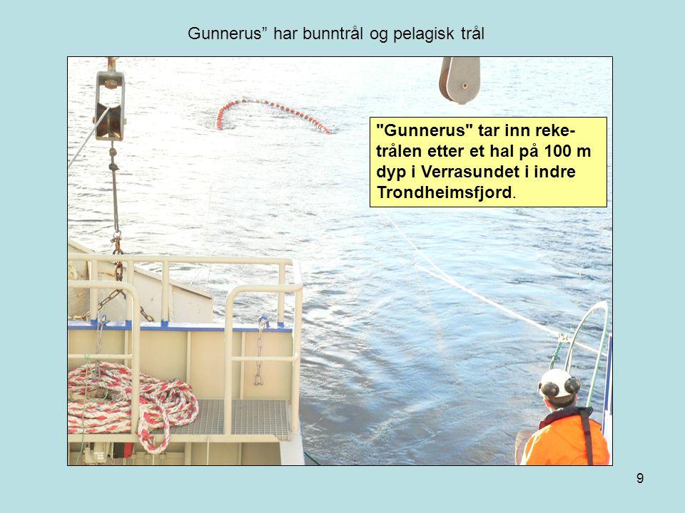 9 Gunnerus tar inn reke- trålen etter et hal på 100 m dyp i Verrasundet i indre Trondheimsfjord.