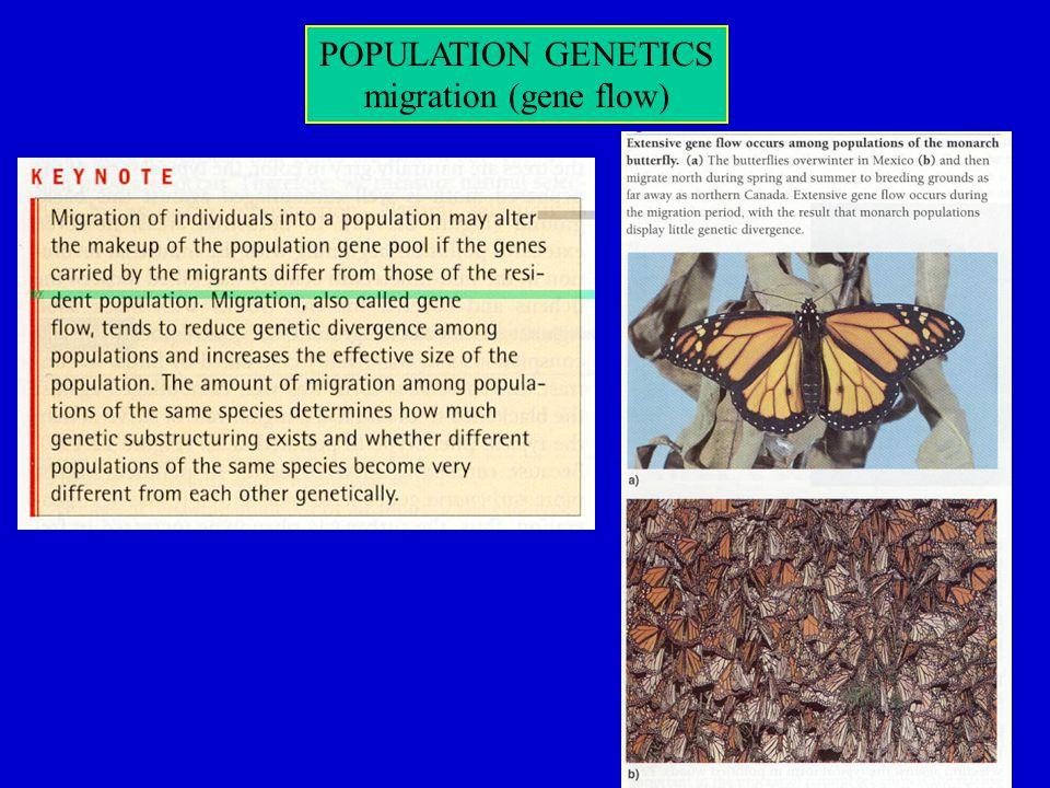 migration (gene flow)