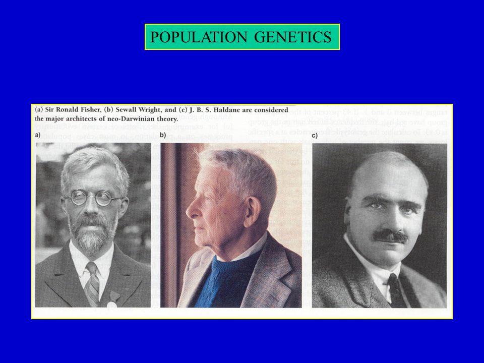 POPULATION GENETICS mutation/drift equilibrium
