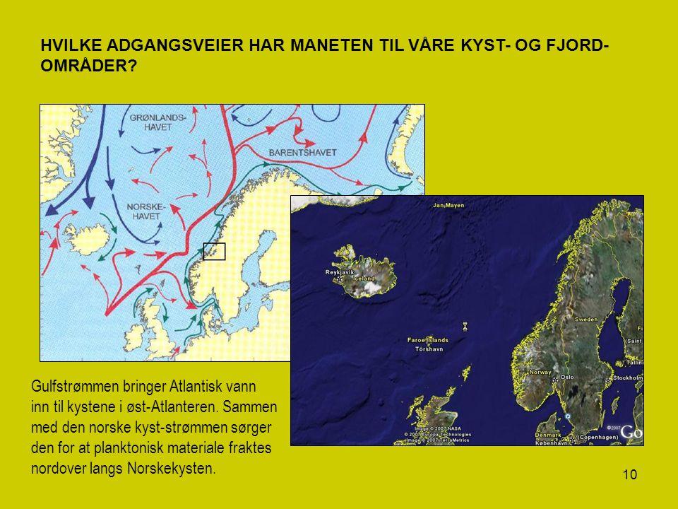 10 HVILKE ADGANGSVEIER HAR MANETEN TIL VÅRE KYST- OG FJORD- OMRÅDER? Gulfstrømmen bringer Atlantisk vann inn til kystene i øst-Atlanteren. Sammen med