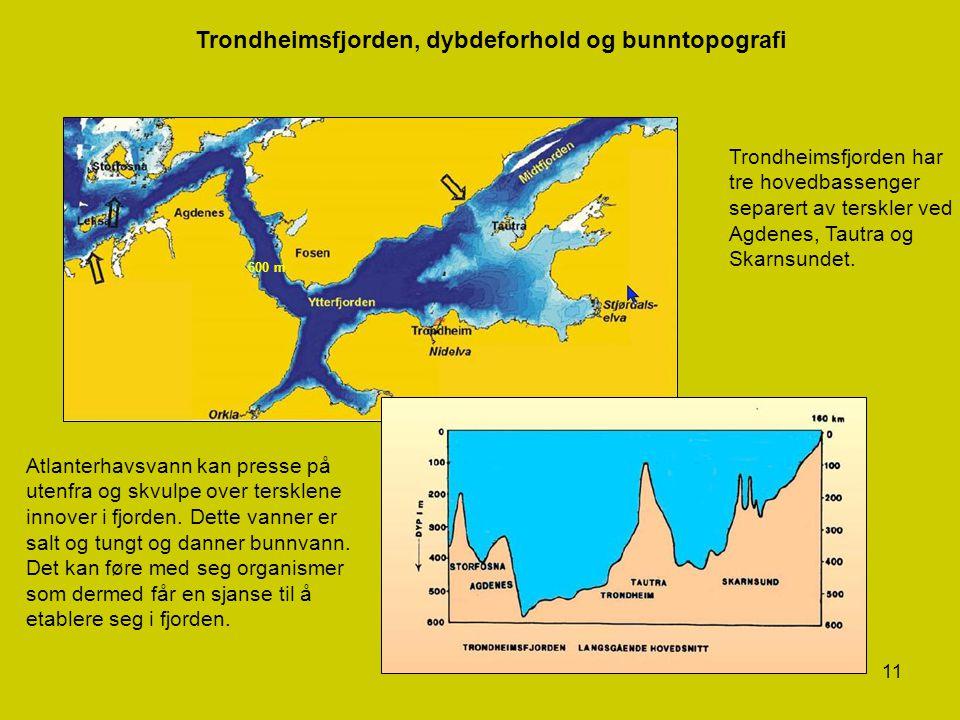 11 Trondheimsfjorden, dybdeforhold og bunntopografi Trondheimsfjorden har tre hovedbassenger separert av terskler ved Agdenes, Tautra og Skarnsundet.