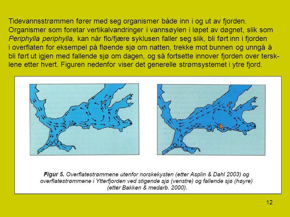 12 Tidevannsstrømmen fører med seg organismer både inn i og ut av fjorden. Organismer som foretar vertikalvandringer i vannsøylen i løpet av døgnet, s