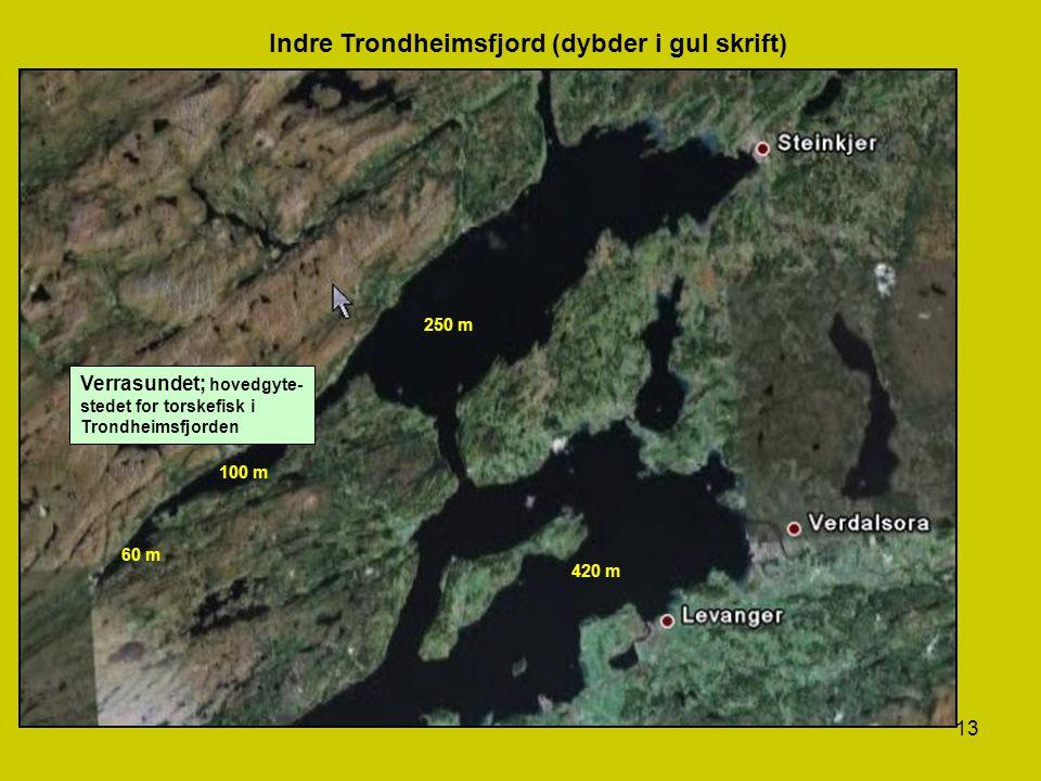 13 Indre Trondheimsfjord (dybder i gul skrift) Verrasundet; hovedgyte- stedet for torskefisk i Trondheimsfjorden 250 m 100 m 60 m 420 m