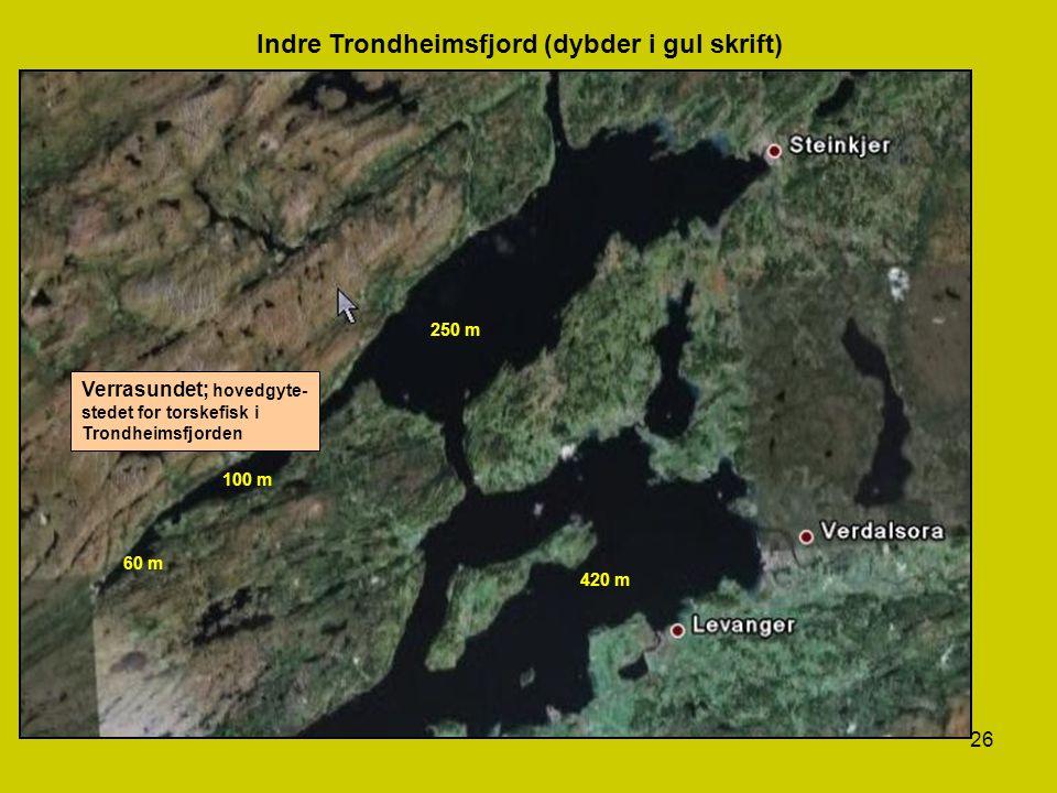 26 Verrasundet; hovedgyte- stedet for torskefisk i Trondheimsfjorden 250 m 100 m 60 m 420 m Indre Trondheimsfjord (dybder i gul skrift)