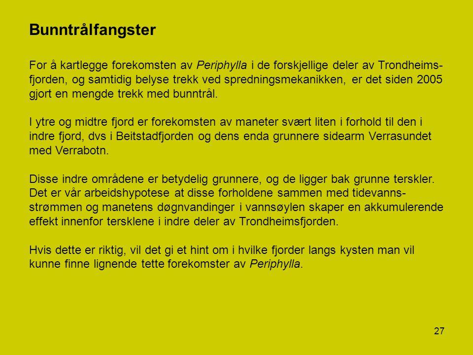 27 Bunntrålfangster For å kartlegge forekomsten av Periphylla i de forskjellige deler av Trondheims- fjorden, og samtidig belyse trekk ved spredningsm
