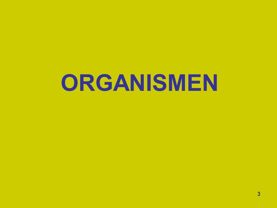 3 ORGANISMEN