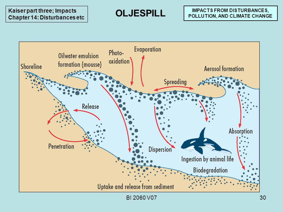 BI 2060 V0730 IMPACTS FROM DISTURBANCES, POLLUTION, AND CLIMATE CHANGE Kaiser part three; Impacts Chapter 14: Disturbances etc OLJESPILL