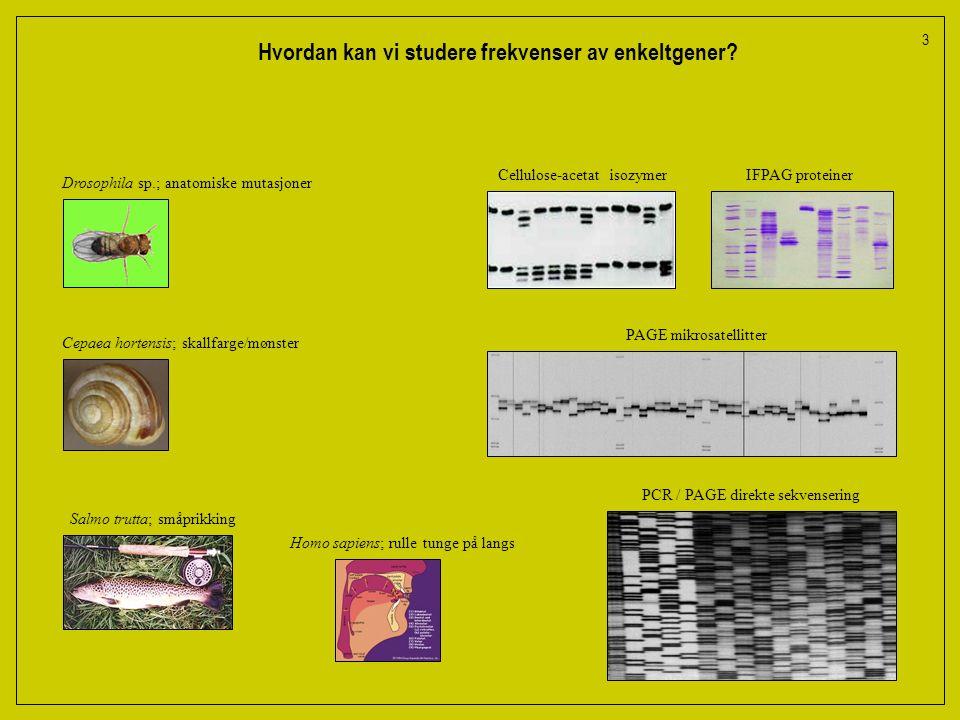 3 Hvordan kan vi studere frekvenser av enkeltgener.