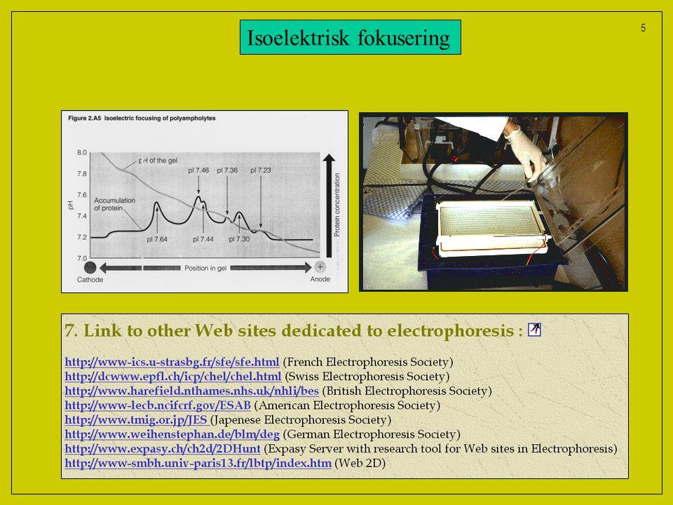 5 Isoelektrisk fokusering