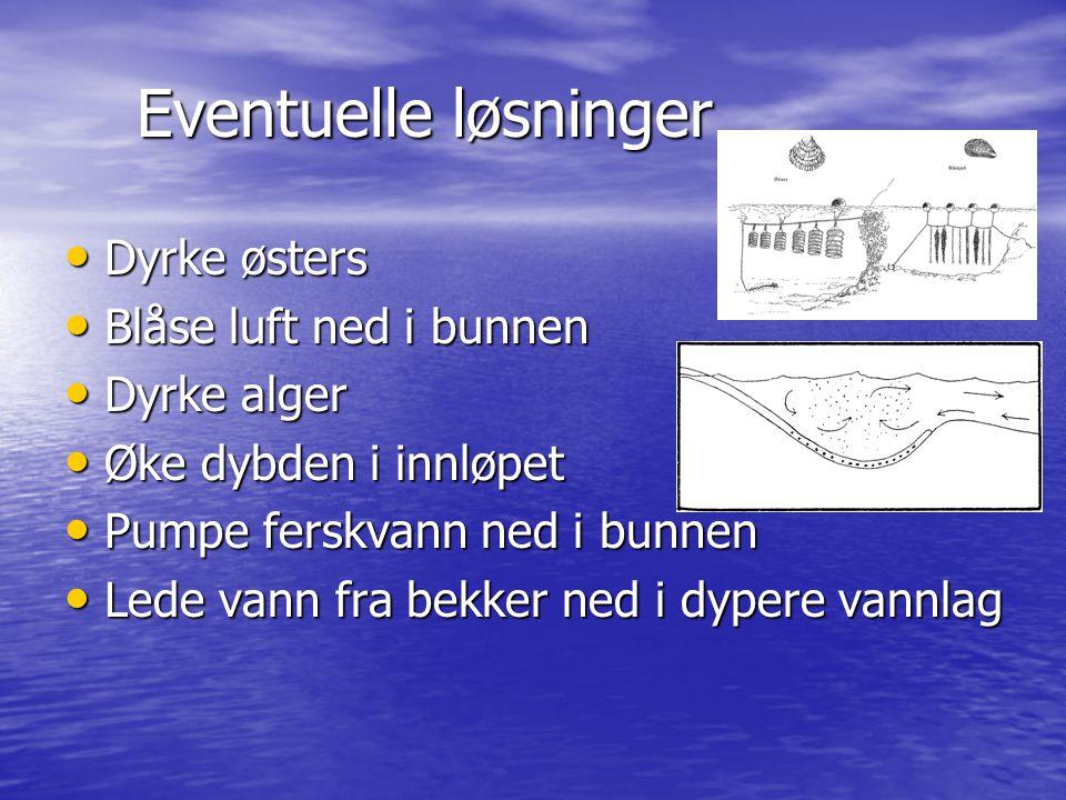 Eventuelle løsninger Dyrke østers Dyrke østers Blåse luft ned i bunnen Blåse luft ned i bunnen Dyrke alger Dyrke alger Øke dybden i innløpet Øke dybde