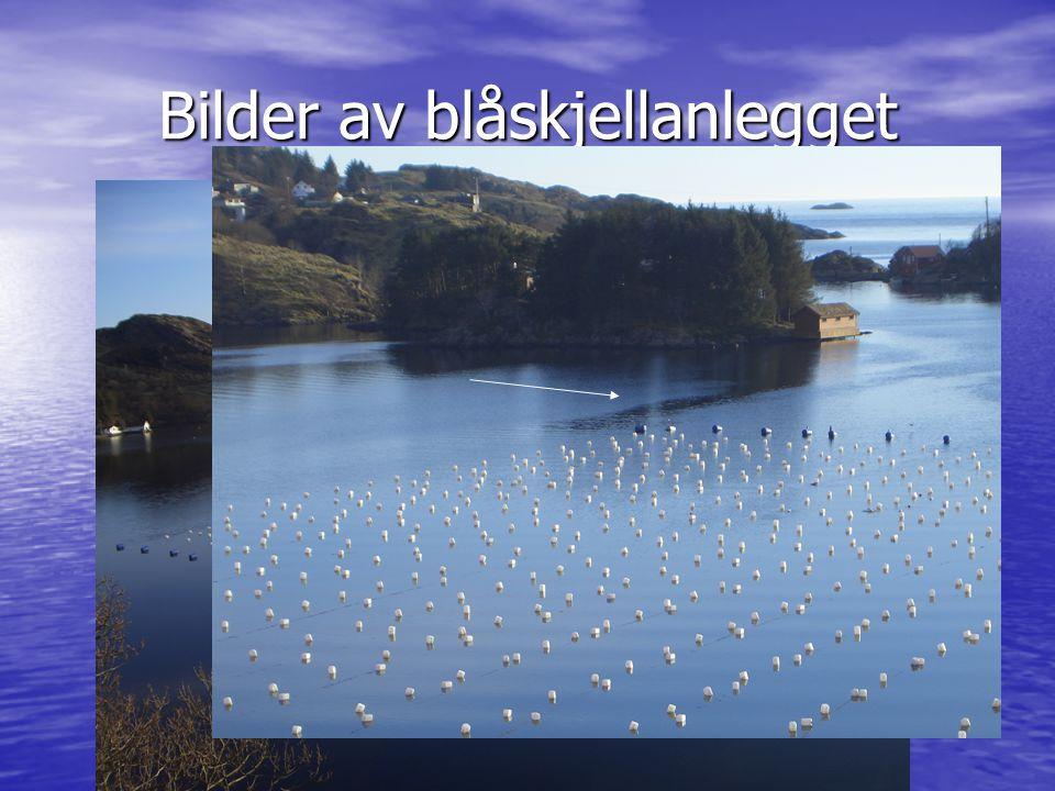 Bilder av blåskjellanlegget