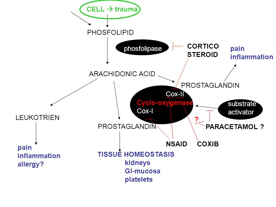 PHOSFOLIPID ARACHIDONIC ACID LEUKOTRIEN PROSTAGLANDIN phosfolipase Cox-II Cyclo-oxygenase Cox-I ? substrate activator CORTICO STEROID PARACETAMOL ? NS